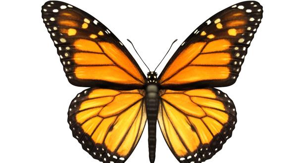 butterfly-bg